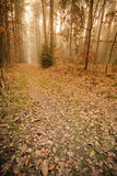 Pathway through the misty autumn forest stock photography