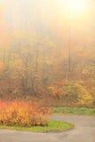 Pathway through the misty autumn park Stock Photos