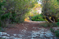 Pathway in a mystical forest Royalty Free Stock Photos