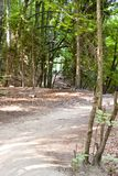 Pathway in National Park. Stock Photography