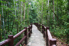 Pathway. In the naturel park Royalty Free Stock Photo
