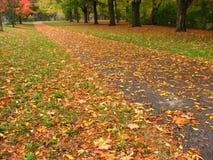 ' the pathway ' natury Obraz Stock