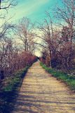 A PATHWAY NEAR LAKE SHORE Royalty Free Stock Photo