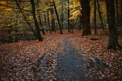 Pathway near pond between trees with last golden leaves in the beautiful autumn forest. Some leaves fallowing down to. The ground Royalty Free Stock Image