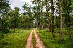 Pathway Near Tree Stock Photo