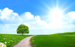 Pathway near Tree in the green field Stock Photography
