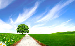 Pathway near Tree in the green field Royalty Free Stock Image