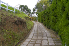 Pathway next to hedge Royalty Free Stock Photography