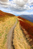 Pathway among nice meadow in mountains Royalty Free Stock Photo