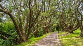 The pathway in nice park. The pathway lined with trees in New Zealand. The pathway in the Auckland park Stock Images