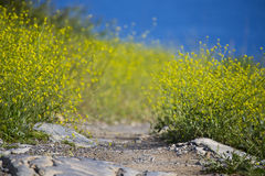 Pathway with nice yellow flowers Stock Photography