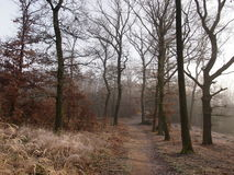 Pathway in the oak forest. Misty autumn morning in the Central European oak forest. The edge of Prague royalty free stock photos