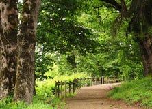 ' the pathway ' ogrodowa Zdjęcie Stock