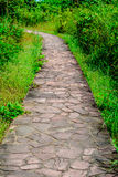 ' the pathway ' ogrodowa Fotografia Royalty Free