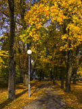 Pathway among old autumnal maples Stock Photography