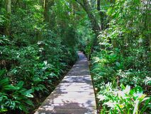 Pathway over water in park in southern rain forest Royalty Free Stock Photo
