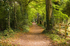 Pathway in Park. Leading between trees Stock Photos