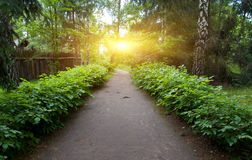 Pathway in park. Among green bushes Royalty Free Stock Photo