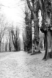 Pathway through park. Scenic view of tree lined pathway in park, black and white photograph Stock Photography