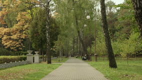 Pathway in the park. Autumn daytime. Smooth dolly shot.  stock video