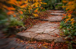 Pathway in a park in autumn Stock Photography