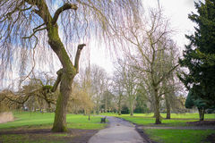 Pathway in a park. Countryside willow tree in early springtime Stock Images