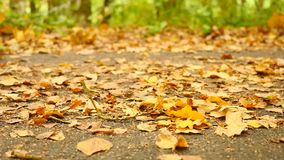 Pathway in park, oak, birch and beeches leaves on the ground. Detail view. Slow controled camera movement. Pathway in park, oak, birch and beeches leaves on the stock footage