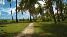Pathway in park with palm trees close to beach. Camera moving forward stock video