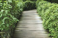 Pathway in park. Straight pathway in tropical park arranged by fresh green plants Stock Photo
