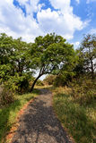 Pathway in a Park Victoria Falls, Zimbabwe in Spring Royalty Free Stock Photography