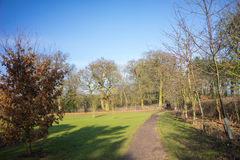 Pathway in a park in wintertime. Bare trees green grass, UK Royalty Free Stock Images