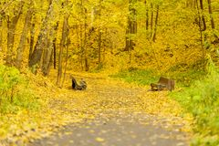 Pathway, path trail on outskirts of park. Old benches, autumn day, many fallen foliage. Crow sitting on bench. Seasons. Pathway, path trail on the outskirts of Royalty Free Stock Photography