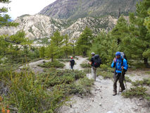 Pathway through pine forest. Annapurna Circuit trek in Nepal, near Bhraka village stock images