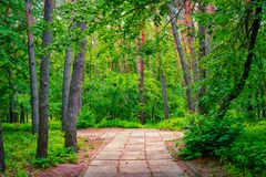 Pathway through pine forest. Nature landscape. Pathway through pine forest. Nature scenic landscape stock photography