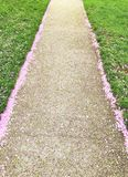 Pathway with Pink Petals stock photo