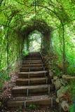 Walk to the nature Stock Photo