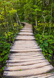 Pathway in Plitvice lakes park at Croatia Stock Photography
