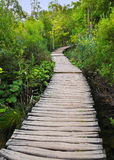 Pathway in Plitvice lakes park at Croatia Royalty Free Stock Image