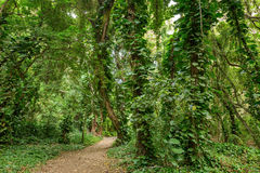 Pathway in Rain-Forest Royalty Free Stock Image