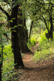 Pathway in rain forest Royalty Free Stock Photos