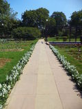 Pathway in Rose Garden, New Delhi. India Royalty Free Stock Photo