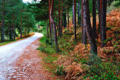 Pathway. Rural mountain road in the middle of a forest Stock Image