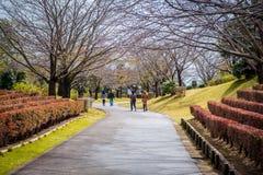 A pathway with Sakura trees and flowers in garden of Ushiku Daibutsu, Japan. stock image