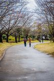 A pathway with Sakura trees and flowers in garden of Ushiku Daibutsu, Japan. stock images
