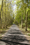 Pathway through scenic forest. Pathway receding into distance through scenic forest in summer Royalty Free Stock Photography