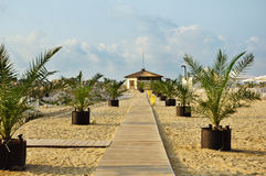 Pathway on sea coast. With palm trees in flower pots Royalty Free Stock Image