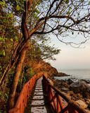 The pathway is by the seashore. Trees forest leaves path pathway sea beach seashore Stock Images