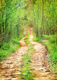 Pathway in secluded deciduous forest Royalty Free Stock Image