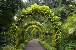 Pathway singapore botanic garden. Beautiful flower archway in singapore botanic garden stock photos