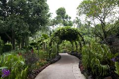 Pathway singapore botanic garden. Beautiful flower archway in singapore botanic garden Royalty Free Stock Images